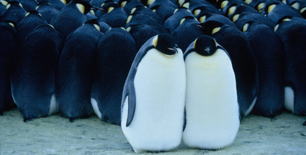 penguine_photo01